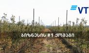 ვითიბი ბანკის მხარდაჭერით ინტენსიური ვაშლის ბაღები გაშენდა