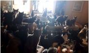 კანადელი კაცი ბინაში 300 კატასთან ერთად ცხოვრობდა