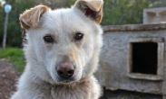 გორში 6 ძაღლი მოწამლეს