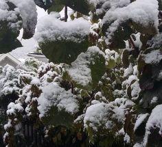 პირველი თოვლის ფოტოები წყნეთიდან
