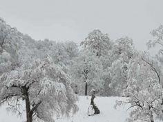 ბაკურიანში თოვლი მოვიდა - საოცარი ფოტოები