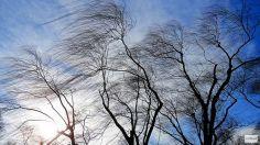 თბილისში ძლიერი ქარი  ღამის განმავლობაშიც შენარჩუნდება