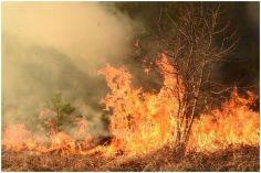BBC: არქტიკა არა მხოლოდ დნება, არამედ ცეცხლშია
