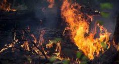 """""""ბორჯომის ტყეში ბუნებრივად ხანძრის გაჩება გამორიცხულია"""" - გიორგი მღებრიშვილი"""