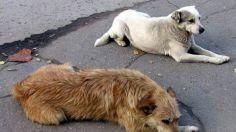 ცხოველების მიმართ სასტიკი და არასათანადო მოპყრობისთვის სასჯელის ზომები მკაცრდება